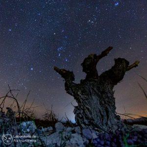viñedo astronomia vino